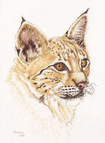 Großkatze, Tiere, Tuschmalerei, Wildtier