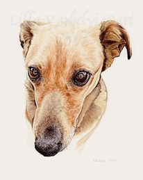 Hund, Blind, Commission, Tusche