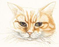 Tierportrait, Federzeichnung, Augen, Tiere