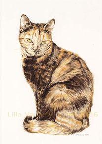 Tusche, Katze, Tierportrait, Tuschezeichnung