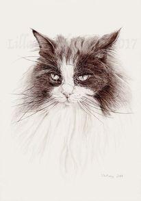 Katze, Tusche, Tiere, Maincoon