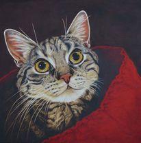 Malerei, Getigert, Tierportrait, Katzenaugen