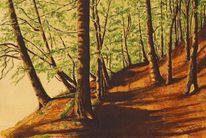 Licht, Wald, Waldweg, Sonne