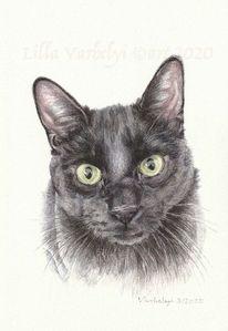 Schwarz, Katze, Auftragsarbeit, Tuschmalerei