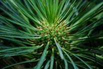 Pflanzen, Nahaufnahme, Natur, Fotografie