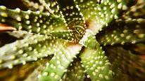 Stachelig, Kaktus, Esgrüntsogrün, Fotografie