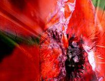Mohnblüten, Violett, Rot schwarz, Bearbeitung