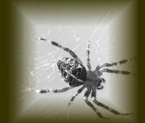 Schwarz weiß, Hässlichkeit, Spinne, Schön