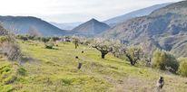 Mandelblüte, Andalusien, Terrasse, Berge