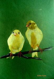 Papagei, Tiere, Vogel, Gelb