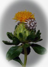 Fotografie, Blüte, Diamant, Natur