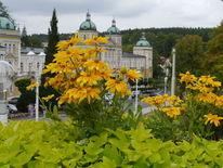 Fotografie, Reise, Blumen, Stadt