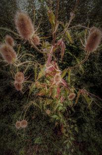 Blätter, Dämmerung, Stachel, Distel