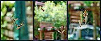 Insekten, Tod, Natur, Jagd
