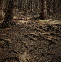 Tanne, Wurzel, Waldboden, Äste