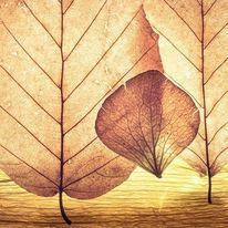 Natur, Blätter, Struktur, Fotografie