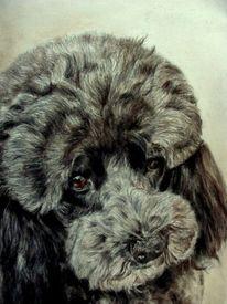 Hundeportrait, Hundezeichnung, Tierzeichnung, Zeichnungen
