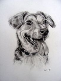 Hundezeichnung, Hundeportrait, Tiermalerei, Zeichnungen