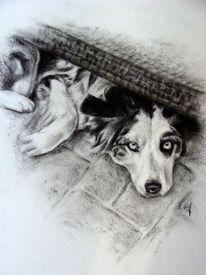 Hundezeichnung, Hundeportrait, Kohlezeichnung, Zeichnungen