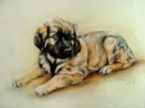 Hundezeichnung, Welpe, Hundeportrait, Zeichnungen