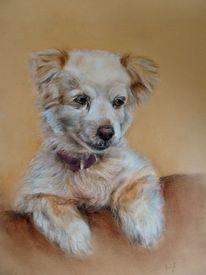 Hundezeichnung, Mischlingshund, Hundeportrait, Zeichnungen