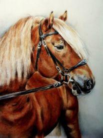 Kaltblüter, Pferdeportrait, Pferdemalerei, Zeichnungen