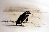 Prinzip, Zoo, Leipzig, Pinguin