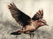 Fliegen, Kohlezeichnung, Steinschmätzer, Vogel