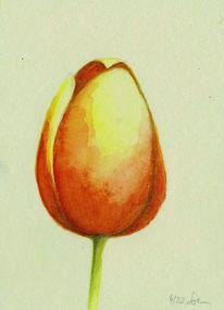 Gelb, Aquarellmalerei, Tulpen, Rot