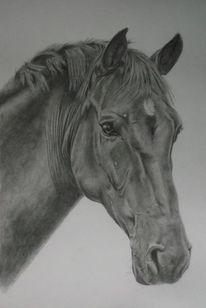 Zeichnung, Pferde, Portrait, Hengst