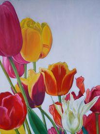 Tulpen, Blumen, Bunt, Rot