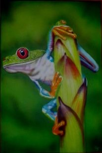 Airbrush, Frosch, Illustrationen, Tiere