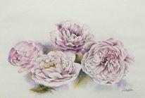 Englische rosen, Blumen, Rosa, Aquarell