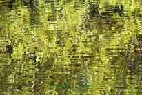 Herbst, Reflektionen, Wasser, Grün