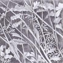 Natur, Zeichnung, Bleistiftzeichnung, Pflanzen