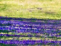 Lavendel, Weizen, Feld, Malerei