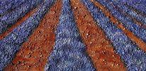 Acrylmalerei, Malerei, Lavendelfeld, Landschaft