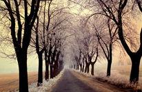 Straße, Winter, Allee, Baum