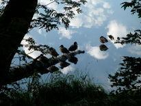 Wasserspiegel, Ente, Himmel, Fotografie