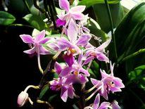Orchidee, Digitale kunst, Digital