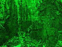 Teich, Regenwald, Fantasie, Stille