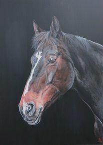 Pferde, Portrait, Pferdekopf, Malerei