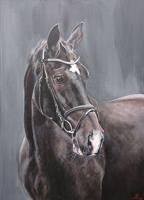 Portrait, Pferdekopf, Pferde, Malerei