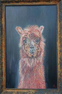 Lama, Tierportrait, Rost, Alpaka