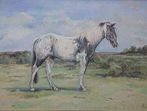Landschaft, Pferde, Appaloosa, Malerei