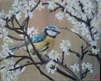 Blaumeise, Frühling, Vogel, Blüte
