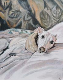 Windhund, Whippet, Galgo, Hund