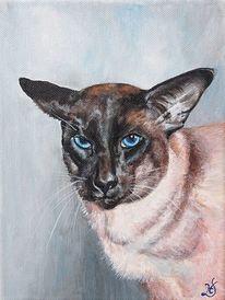 Siamkatze, Kater, Katze, Malerei