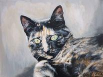 Portrait, Katze, Kater, Malerei