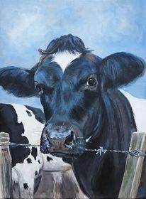Kalb, Schwarz weiß, Holsteiner, Landleben